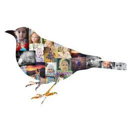 Bird Photo Collage – #1