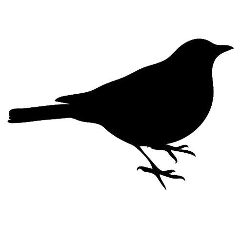 Bird Photo Collage - #2