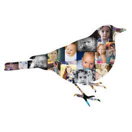 Bird Photo Collage – #2