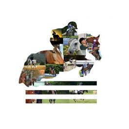 Equestrian Photo Collage