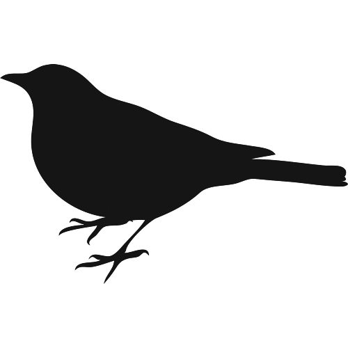 Bird Photo Collage - #1
