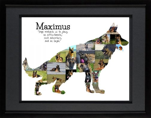 German Shepherd Collage with Black Matted Frame