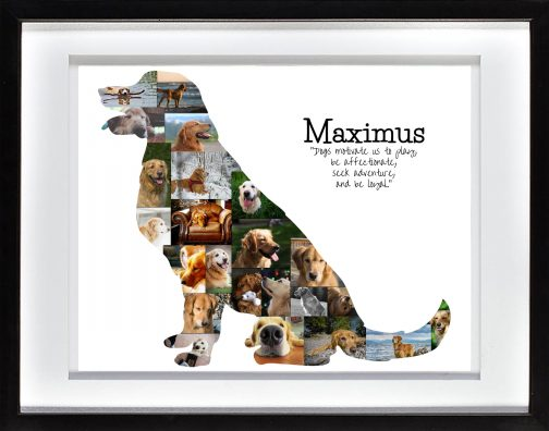 Golden Retriever Collage with White Matted Frame