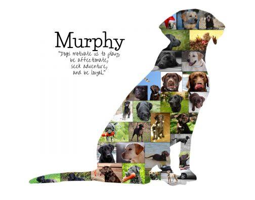 Labrador Dog Photo Collage