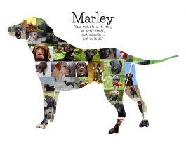 Labrador Dog Collage