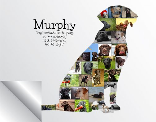 Labrador Dog Photo Collage Printed Version